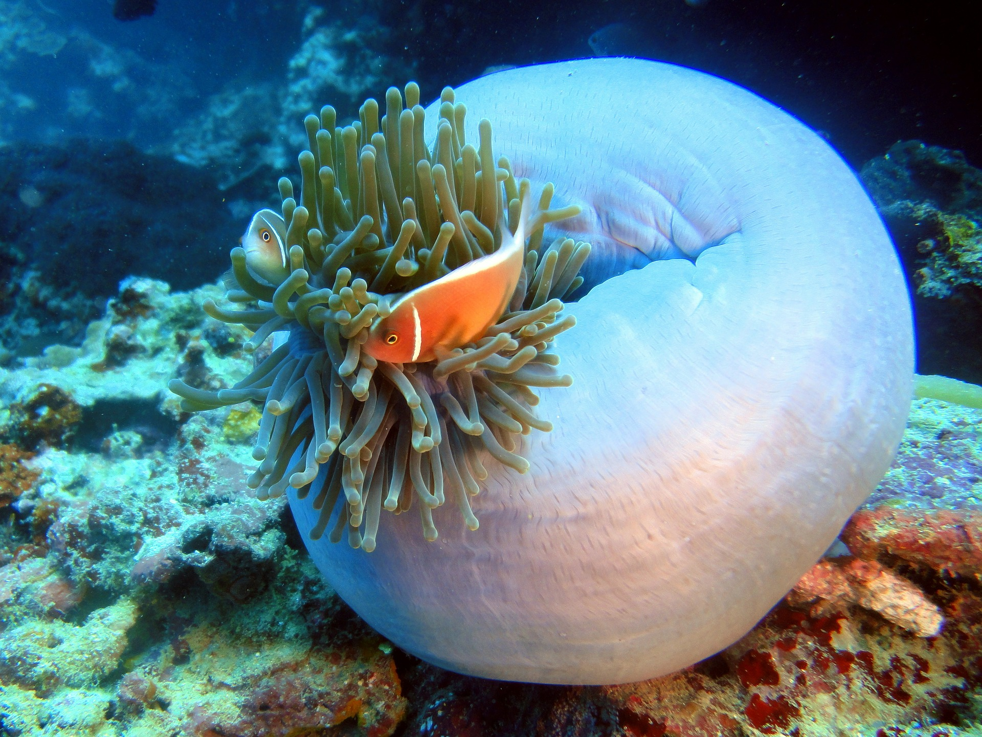 Schnorcheln mauritius Anelia Resort