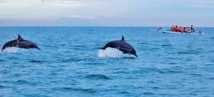 Delfine Indonesien