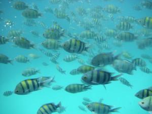 Fischschwarm_Ägypten_Schnorcheln