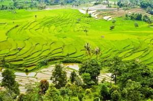 Reisefelder Indonesien Schnorcheln Indonesien