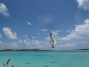 Schnorchelgebiete bahamas-203403_1920