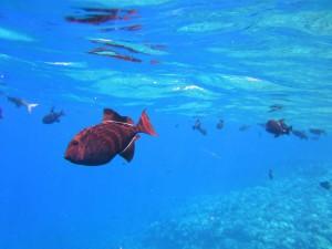 Schnorcheln Fisch