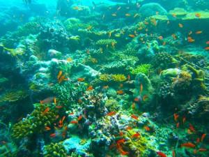 Unterwasserwelt Malediven Schnorchelgebiete Malediven