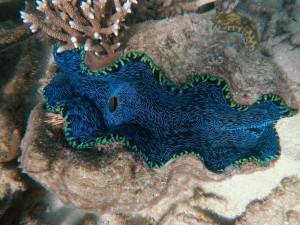great barrier reef australien schnorchelplatz