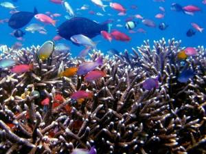 tropische Fische Indonesien