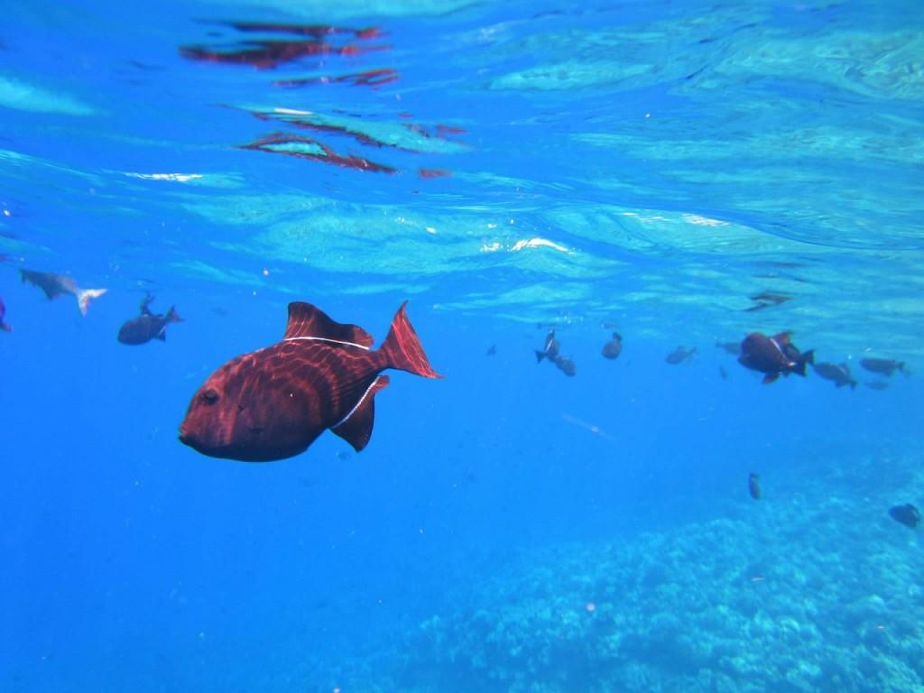 Fische Koh Chang Thailand