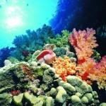 Unterwasserwelt Schnorchelbuch