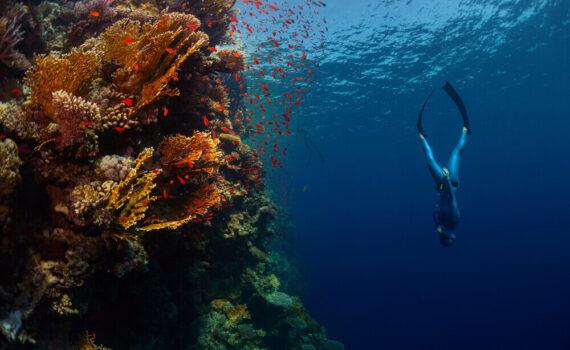 Freitauchen Freediving Infos Ausrüstung